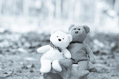 Lovely teddy brown and white Royalty Free Stock Photography