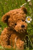Lovely teddybear in the grass. Looking at a white flower Stock Images