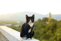 Lovely thai black and white cat sitting on terrace against beaut Royalty Free Stock Photography