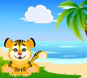 Lovely tiger Stock Images
