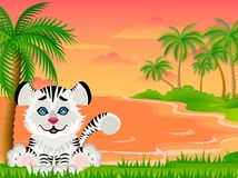 Lovely tiger Royalty Free Stock Photos