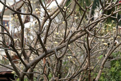 Lovely tree branches Royalty Free Stock Photography