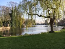 Bruges, Belgium. Tree by the river. stock image