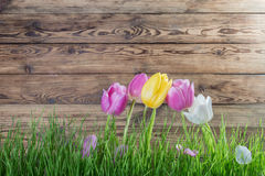 Lovely tulip flowers Stock Photos