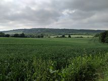 A view in the fields. A lovely view across several fields during a walk. You can see lots of trees in the distance with some clouds above Royalty Free Stock Image