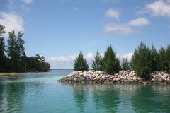 A lovely view of firs on the sea Stock Photography