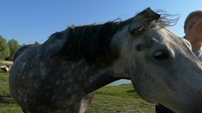 Smiling woman stokes a spotted mare on a lake bank in slo-mo. A lovely view of a smiling woman stroking a friendly horse with her hand on a lake bank in summer stock video