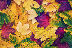 Lovely vintage color saturated autumn leaves collage Royalty Free Stock Image