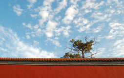 Lovely weather in Beijing. Blue sky, white clouds, old cypress and red wall make a lovely day in Beijing Royalty Free Stock Image