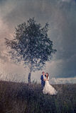 Lovely wedding couple Royalty Free Stock Image