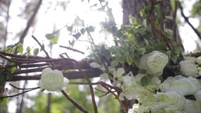 Lovely white bush roses. Ornamental white flowers on bright sun. Tender roses in garden.Beautiful roses with green stock footage