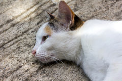 Lovely white cat lay down on cement floor Royalty Free Stock Photography