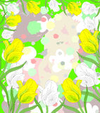Lovely white and yellow tulips in bloom Stock Photography
