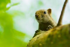 Lovely wild Squirrel Stock Photo