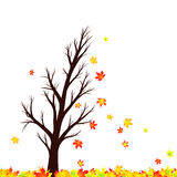 Lovely windy autumn season maple tree silhouette with leaves Stock Photography