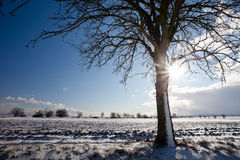 Lovely winter landcape on a  winter day Royalty Free Stock Photo