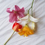 Lovely yellow , white and pink lilly and red tulip royalty free stock images