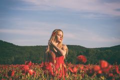Lovely young blonde girl in a poppy field at sunset. Light, vintage image. Happiness and beauty people concept royalty free stock photos
