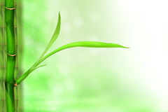 Lovely young green bamboo Royalty Free Stock Image