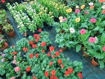 Lovelyl exhibition flowers Stock Photo