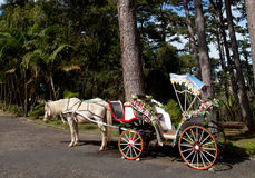 Lover Carriage royalty free stock photos