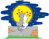 Lover cats on a brick wall Royalty Free Stock Image