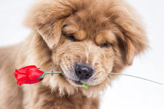 Lover Dog Royalty Free Stock Photos