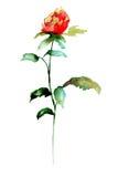 Сlover flower Royalty Free Stock Image