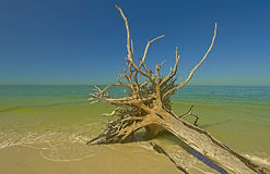 Lover's Key,Florida Stock Images