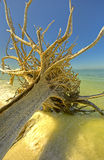 Lover's Key,Florida Royalty Free Stock Images