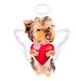 Lover valentine  puppy dog with a red heart. Cute lover valentine puppy dog with a red heart isolated on white background Royalty Free Stock Photos