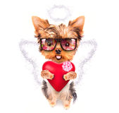 Lover valentine  puppy dog with a red heart Royalty Free Stock Images