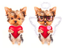 Lover valentine  puppy dog with a red heart. Cute lover valentine puppy dog with a red heart isolated on white background Royalty Free Stock Images