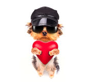 Lover valentine  puppy dog with a red heart Royalty Free Stock Photo
