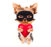 Lover valentine  puppy dog with a red heart. Cute lover valentine puppy dog with a red heart isolated on white background Royalty Free Stock Image