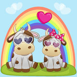 Lovers Cows Royalty Free Stock Images