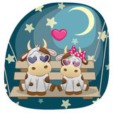 Lovers Cows Royalty Free Stock Photos