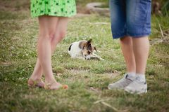 Lovers and a dog on summer walk. Dog beetween couple`s lags. lovers and a dog on summer walk Royalty Free Stock Photos