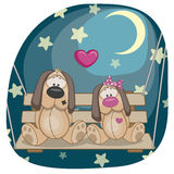 Lovers Dogs Stock Photo