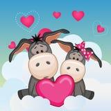 Lovers Donkeys Stock Images