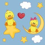 Lovers Ducks Stock Image