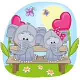 Lovers Elephants Stock Photography