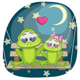 Lovers Frogs Stock Photo