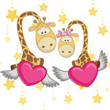Lovers Giraffe Stock Photography