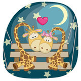 Lovers Giraffe Stock Photo