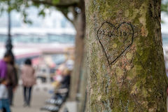 Lovers Heart And Date Carved In Tree. Stock Images