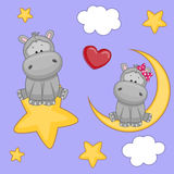 Lovers Hippos Royalty Free Stock Photo