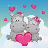 Lovers Hippos Stock Photos