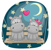 Lovers Hippos Stock Images