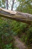 Lovers' Initials on Fallen Eucalyptus. Lovers' Initials on Eucalyptus fallen across the trail Royalty Free Stock Image